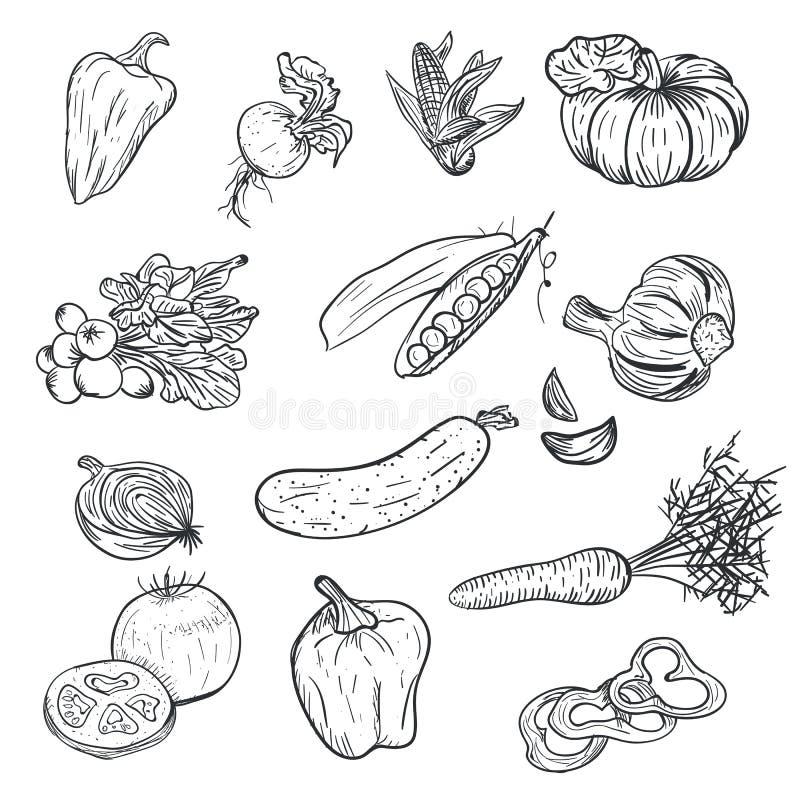 De groenten van de handtekening in krabbelstijl op witte achtergrond wordt geïsoleerd die De groente van de krabbeltekening Rijp  vector illustratie