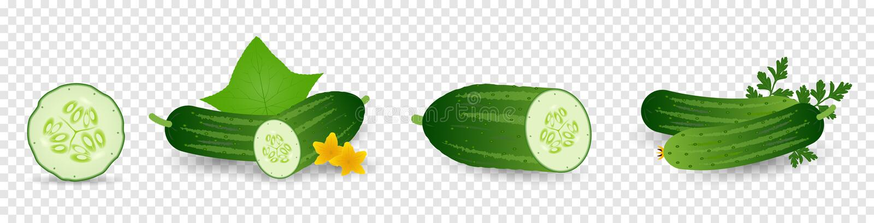 De groenten van komkommers met doorbladert en bloeit Reeks van komkommerzaad, spruit, bloem, plantaardige bladeren, De installati stock illustratie