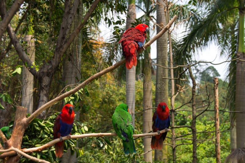 De groep heldere papegaaien royalty-vrije stock afbeeldingen