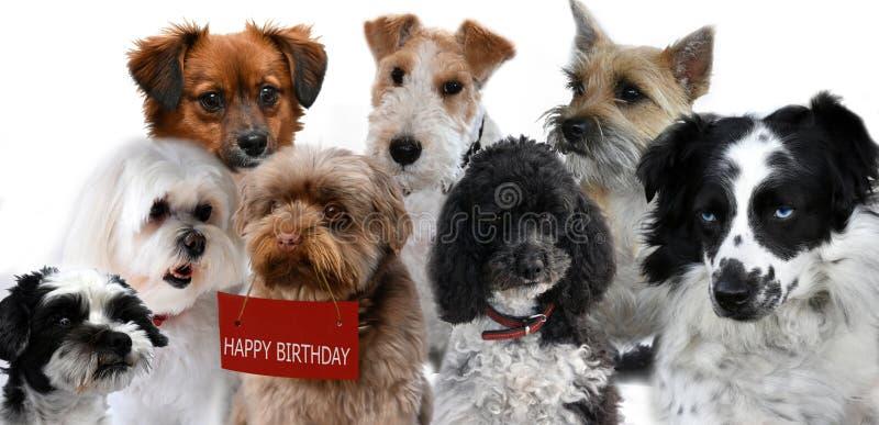 De groep honden wenst met verjaardag geluk stock foto