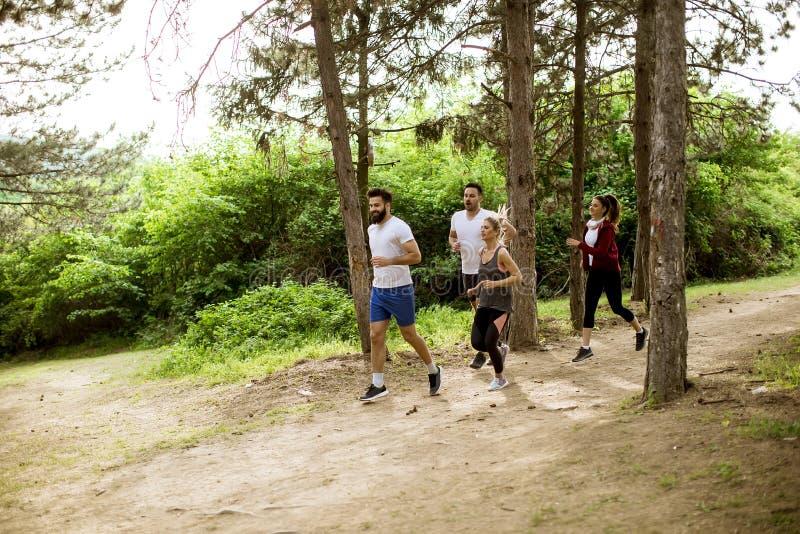 De groep jongeren neemt een marathon het bos door stock foto