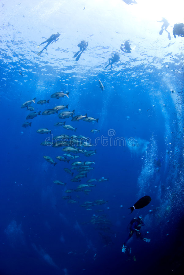 De groep van de duiker met vissen stock afbeeldingen