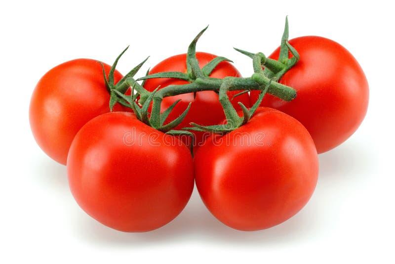 De Groep van de tomaat royalty-vrije stock afbeeldingen