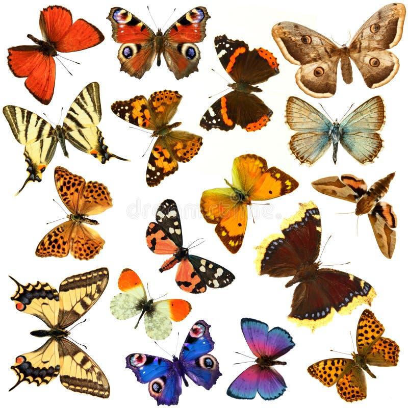 De groep van de vlinder royalty-vrije stock foto