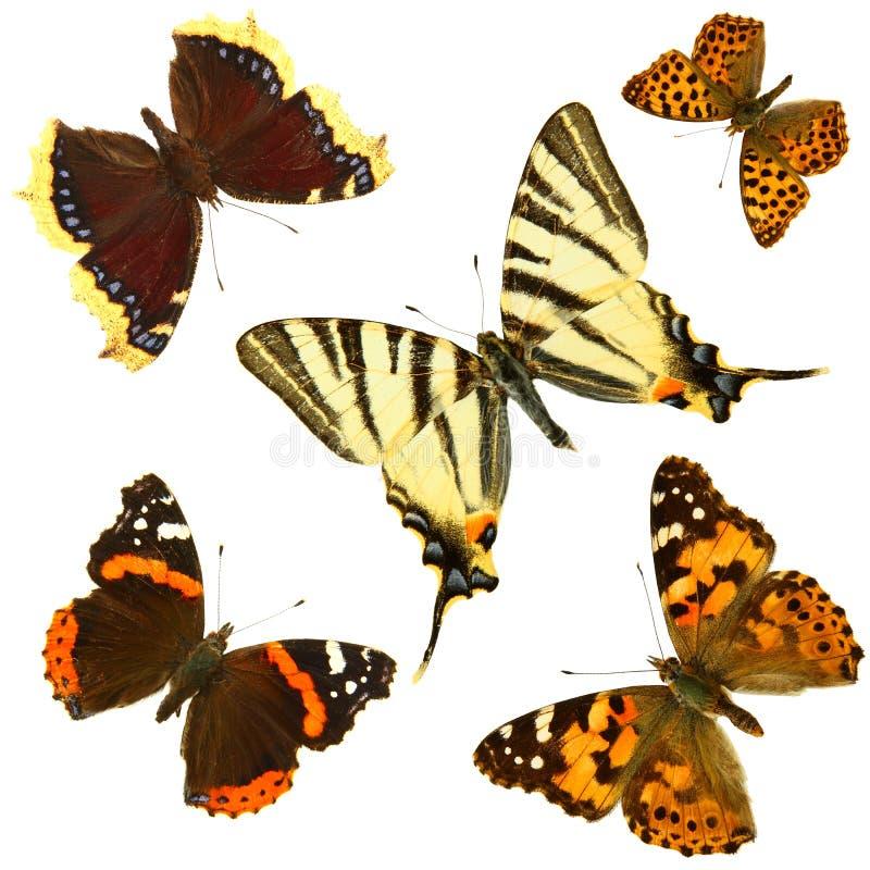 De groep van de vlinder stock illustratie