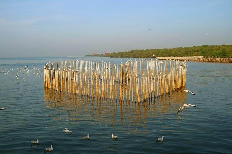 De groep Zeemeeuwen geniet van het Ochtendzonlicht op het Overzees rond Hart Gevormde Houten Polen, Klappu Strand, Samutprakarn,  stock afbeelding