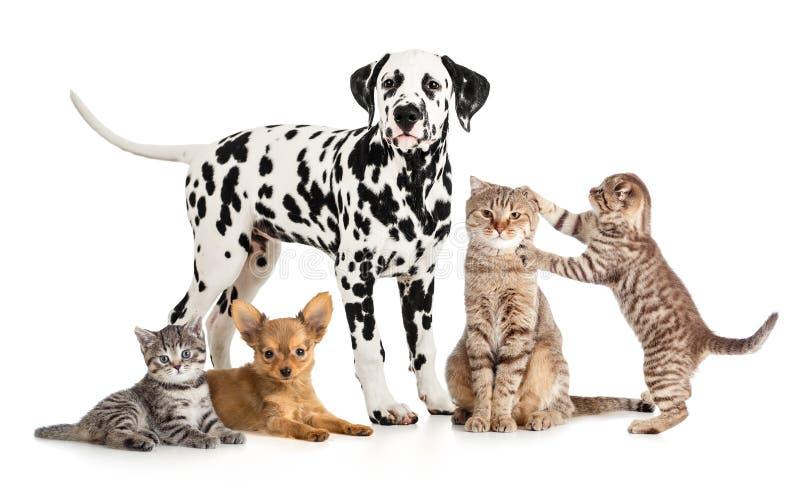 De groepscollage van huisdierendieren voor veterinair of petshop stock fotografie