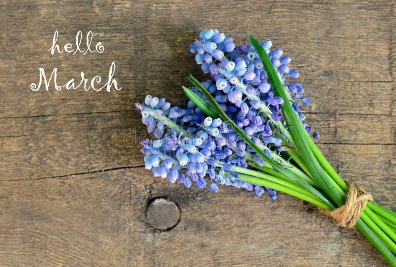 De de groetkaart van Hello Maart met Druivenhyacint of Muscari bloeit op oude houten achtergrond royalty-vrije stock afbeeldingen