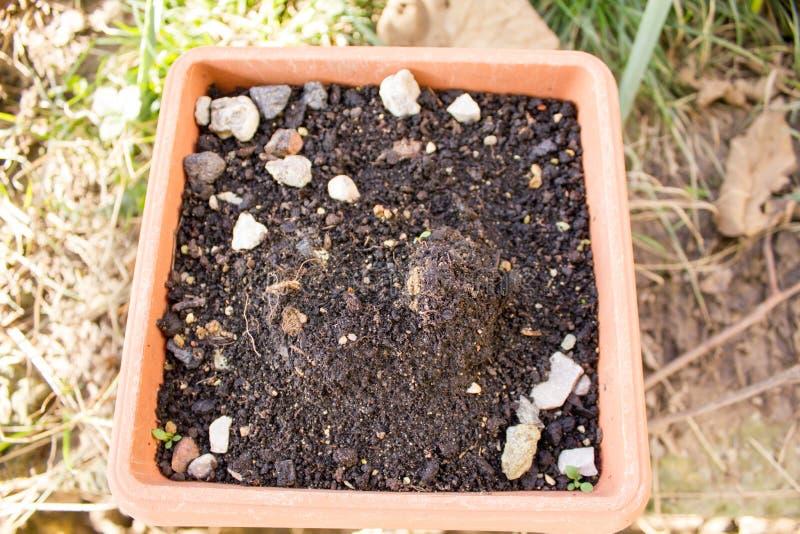 De grond in de pot voor het planten stock afbeelding