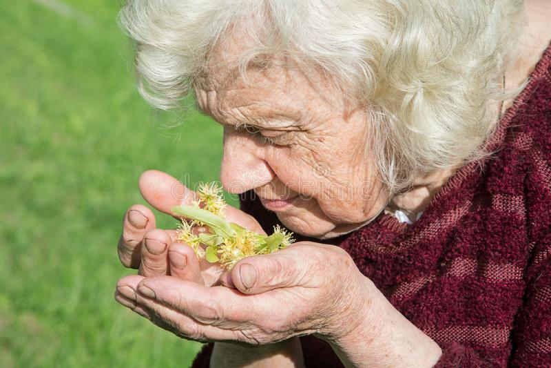 De grootmoeder houdt een kalkbloem in haar handen stock afbeeldingen