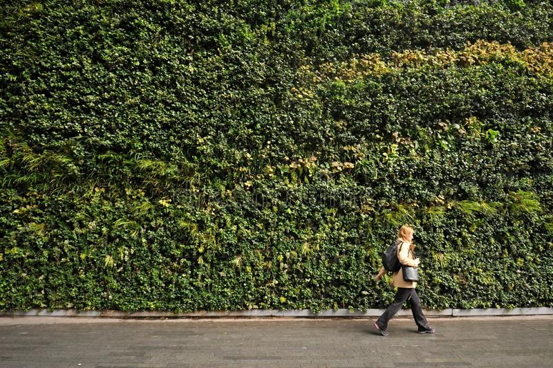 De grootste verticale tuin in Londen in Fenchurch-Straat het leven muur bevat rond 52.000 installaties royalty-vrije stock afbeelding