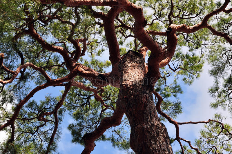 De grote boom stock foto