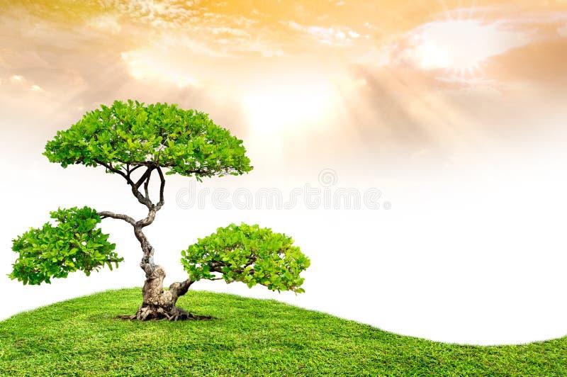 Download De grote boom stock afbeelding. Afbeelding bestaande uit bloem - 29512697