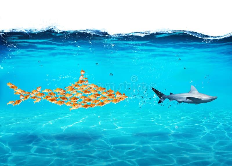 De grote die haai van goudvissen wordt gemaakt valt een echte haai aan Het concept eenheid is sterkte, groepswerk en vennootschap stock foto's