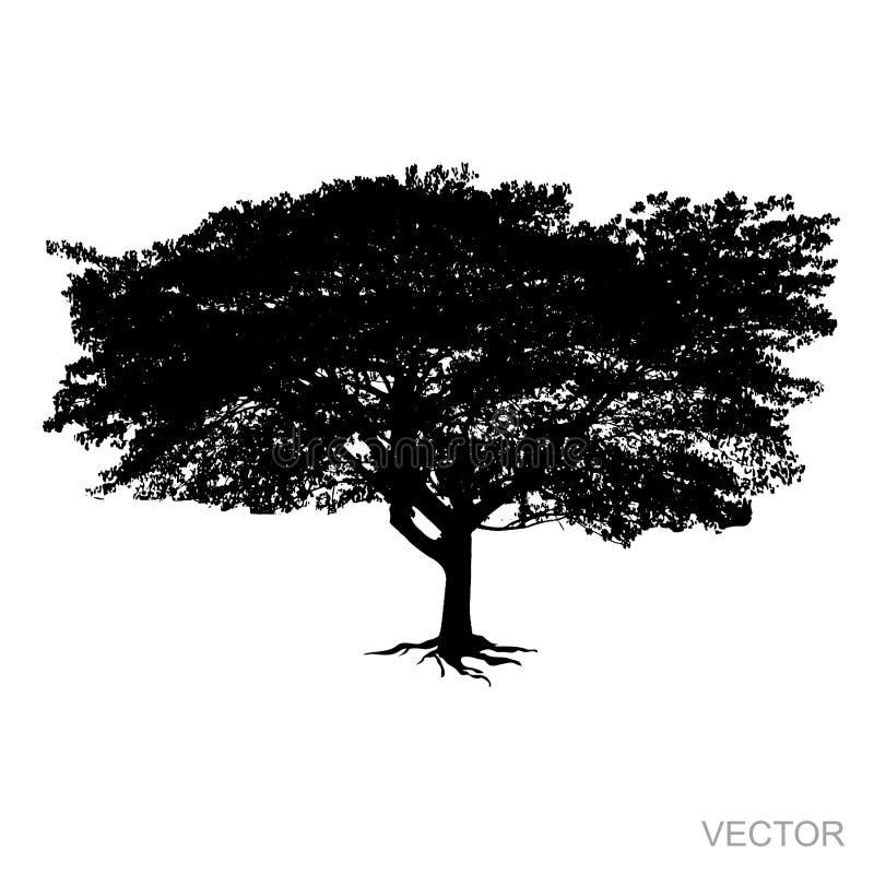 De grote die Vector van het boomsilhouet op witte achtergrond wordt geïsoleerd vector illustratie