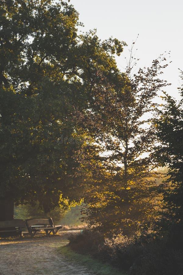 De grote eiken die boom bovenop de rug van Amerongse Berg prachtig door vroege ochtendzonneschijn wordt aangestoken stock foto