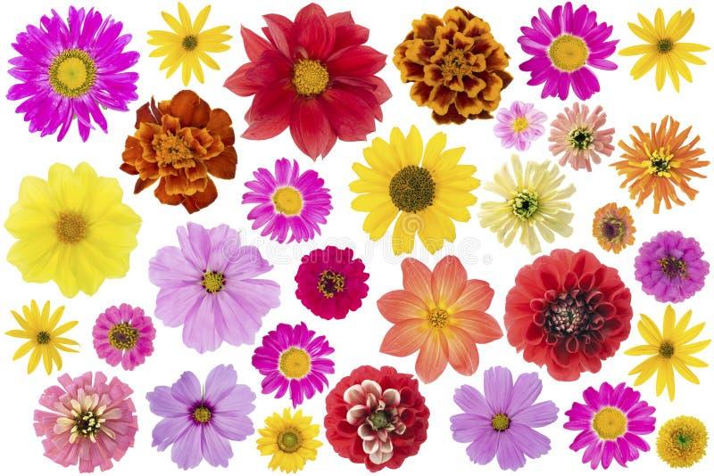 De grote geïsoleerde reeks van bloemen royalty-vrije stock afbeeldingen