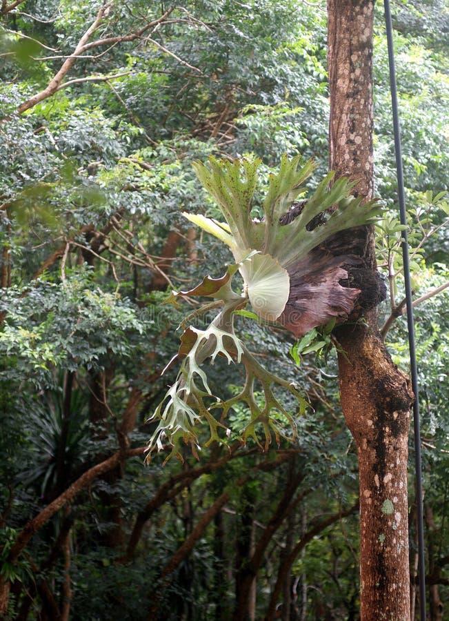 De grote groei van de varenbladeren van de grootte mooie parasiet op een oude boom royalty-vrije stock foto's