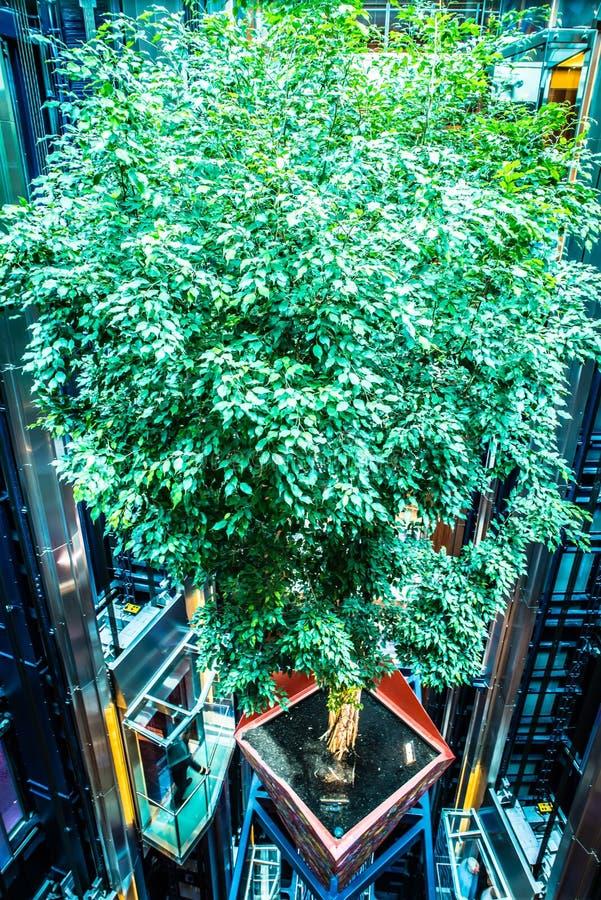 De grote hal van het cruiseschip met echte levende groene opgeschorte boom royalty-vrije stock fotografie