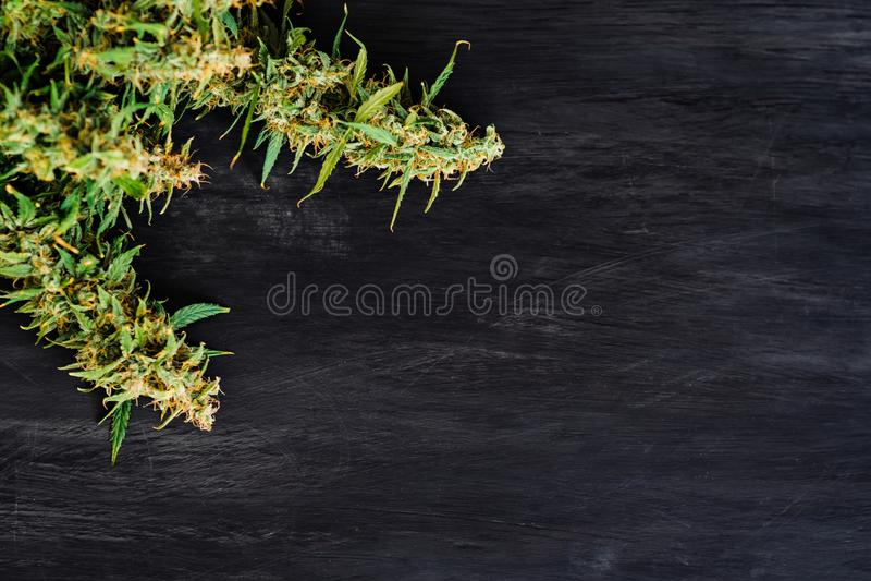 De grote knoppen van verse cannabis wieden op een zwarte achtergrond van een houten lijst met een plaats voor exemplaarruimte royalty-vrije stock fotografie