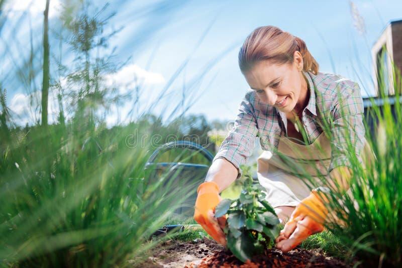 De grote minnaar die van tuinbouw het verbazen voelen terwijl het planten bloeit stock fotografie