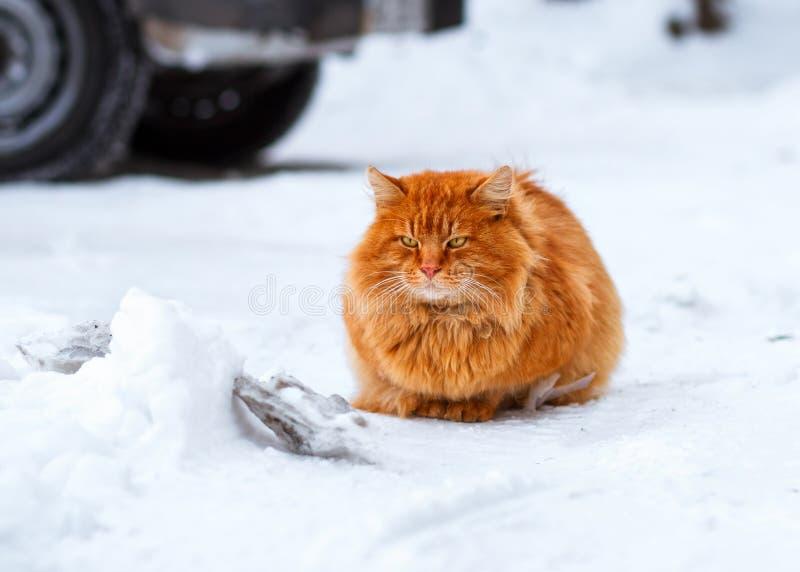 De grote pluizige zitting van de gemberkat in de sneeuw, verdwaalde dieren in de winter, daklozen bevroren kat royalty-vrije stock afbeeldingen