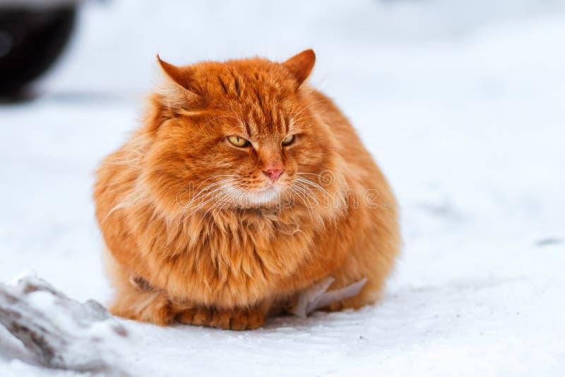 De grote pluizige zitting van de gemberkat in de sneeuw, verdwaalde dieren in de winter, daklozen bevroren kat stock fotografie
