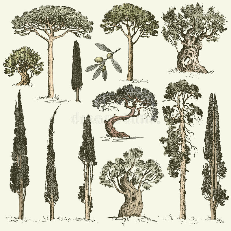 De grote reeks van gegraveerd, hand getrokken bomen omvat pijnboom, olijf en cipres, sparren bosvoorwerp vector illustratie