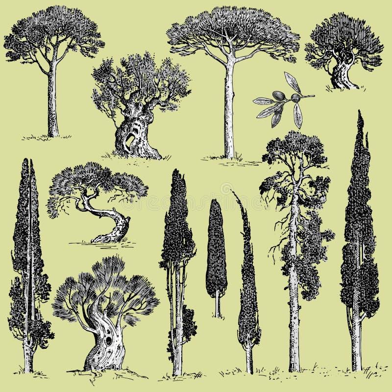 De grote reeks van gegraveerd, hand getrokken bomen omvat pijnboom, olijf en cipres, sparren bosvoorwerp stock illustratie