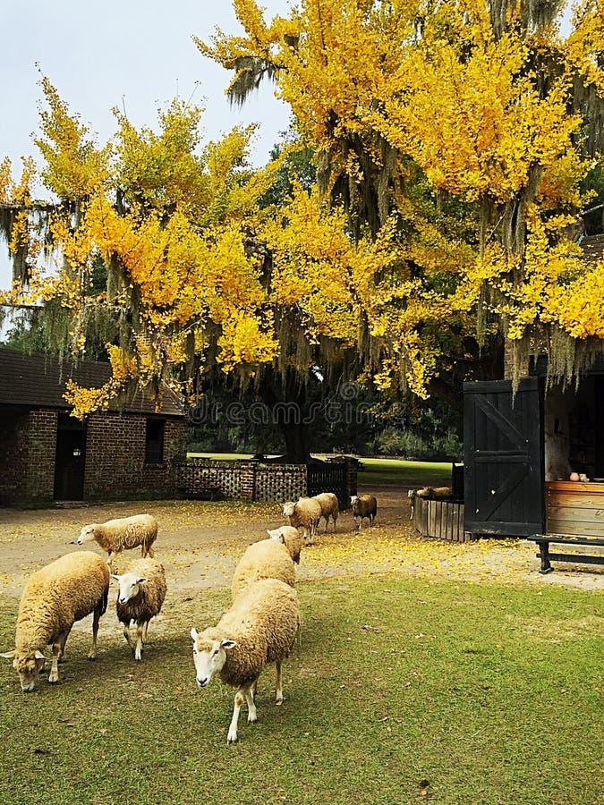 De grote schapenvlucht stock afbeeldingen