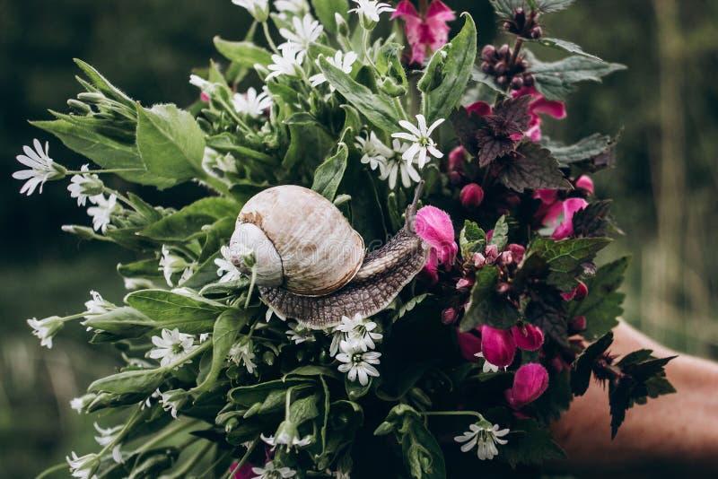 De grote slak die en op kleurrijk de lenteboeket kijken kruipen van zal royalty-vrije stock afbeeldingen