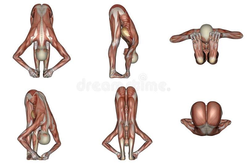 De grote tenen yoga stellen voor vrouw met zichtbare spier stock illustratie