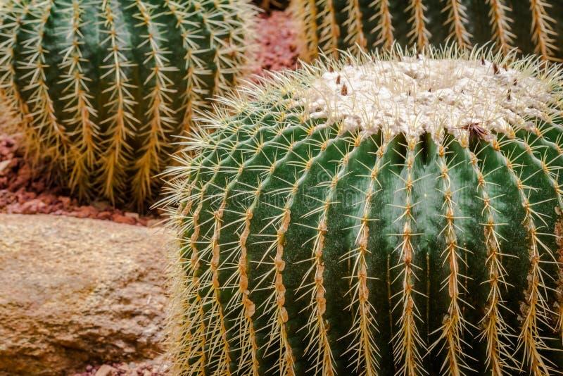 De grote vorm van de cactuscirkel stock afbeelding