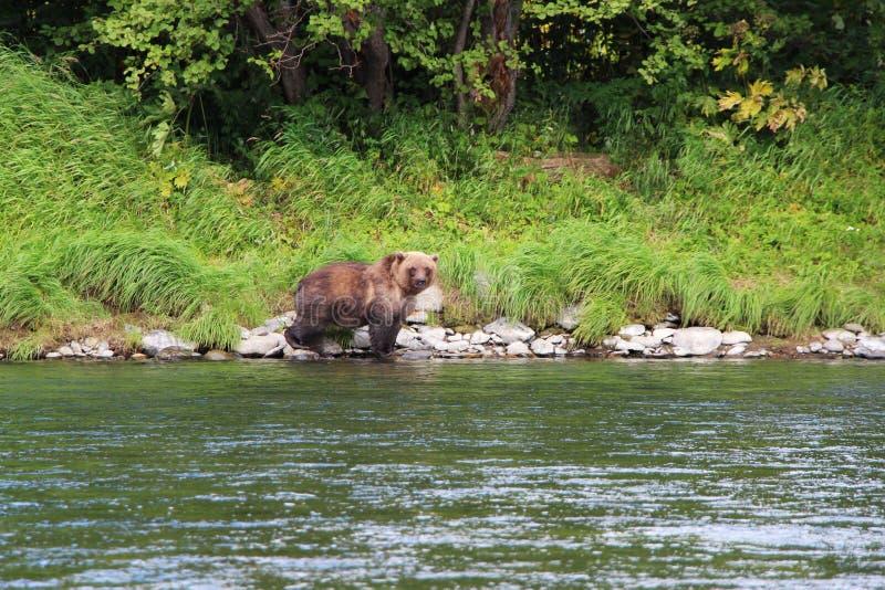De grote wildernis draagt gangen door rivier stock foto's
