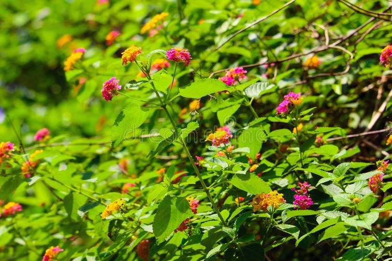 De härliga flowerlsna med natursidor fotografering för bildbyråer