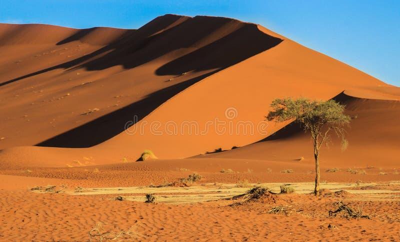 De h?gsta sanddyerna i v?rlden p? solnedg?ngen i den Namib ?knen, i den Namib-Nacluft nationalparken i Namibia arkivfoton
