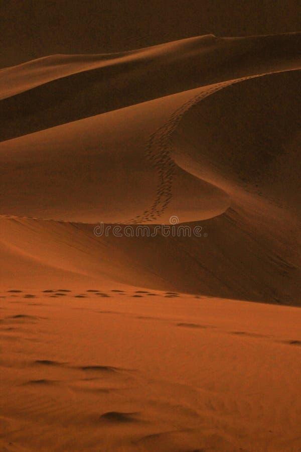 De h?gsta sanddyerna i v?rlden p? solnedg?ngen i den Namib ?knen, i den Namib-Nacluft nationalparken i Namibia arkivbild
