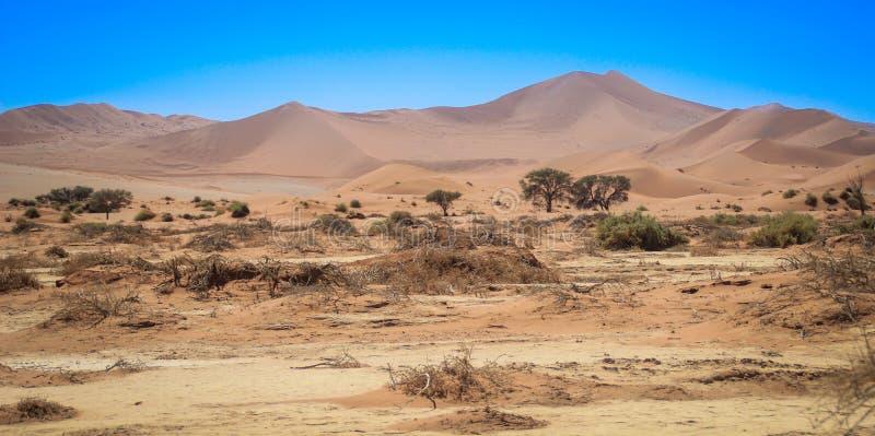 De h?gsta sanddyerna i v?rlden p? solnedg?ngen i den Namib ?knen, i den Namib-Nacluft nationalparken i Namibia fotografering för bildbyråer