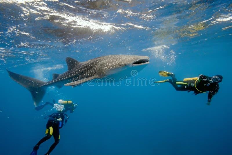 De haai en de duikers van de walvis van de Maldiven royalty-vrije stock afbeelding