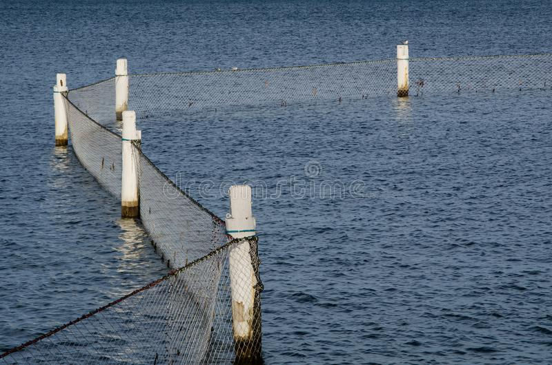Is de haai netto barrière zeebedding-aan-oppervlakte beschermende barrière die wordt geplaatst rond een strand om mensen te besch stock afbeeldingen