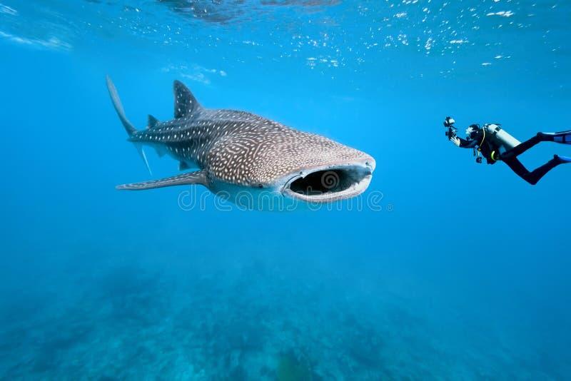 De haai van de walvis en onderwaterfotograaf royalty-vrije stock afbeeldingen