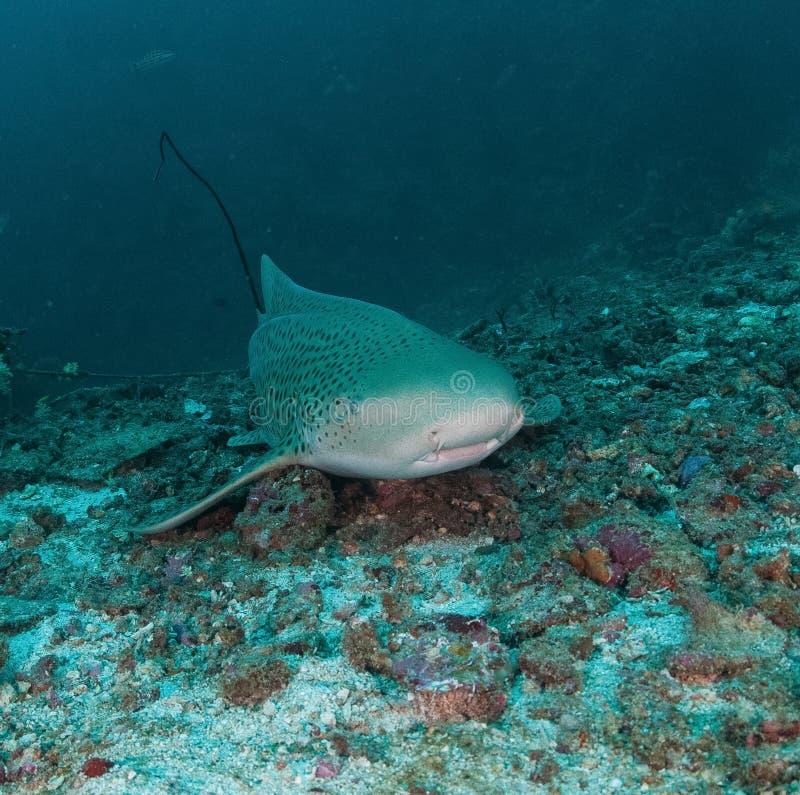 De haai van de walvis onderwater royalty-vrije stock afbeeldingen