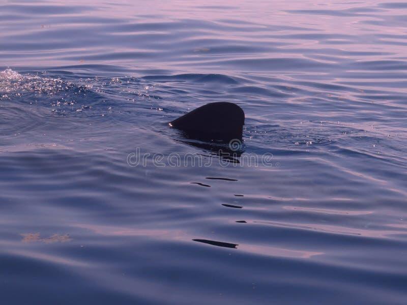 De haaien zijn vrienden geen vijanden royalty-vrije stock fotografie