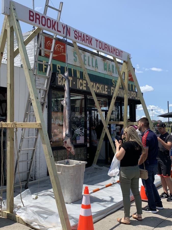 De haaitoernooien 2019 22 van Brooklyn juni stock afbeeldingen