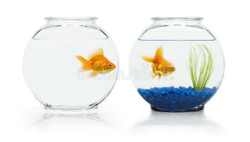 De Habitat van de goudvis royalty-vrije stock afbeelding