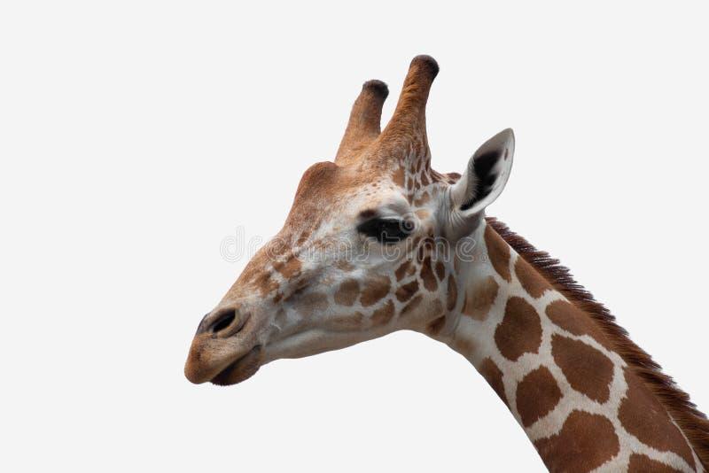 De habitat van een giraf royalty-vrije stock foto