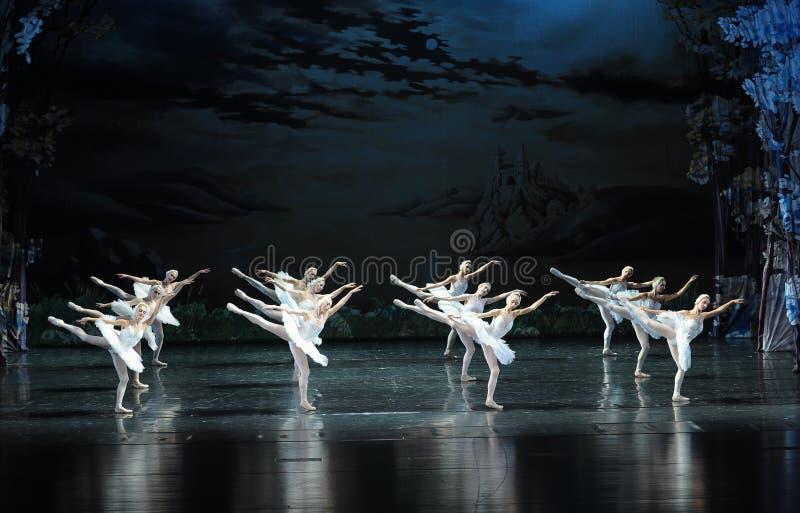 De habitat van zwaan-ballet Zwaanmeer royalty-vrije stock foto's