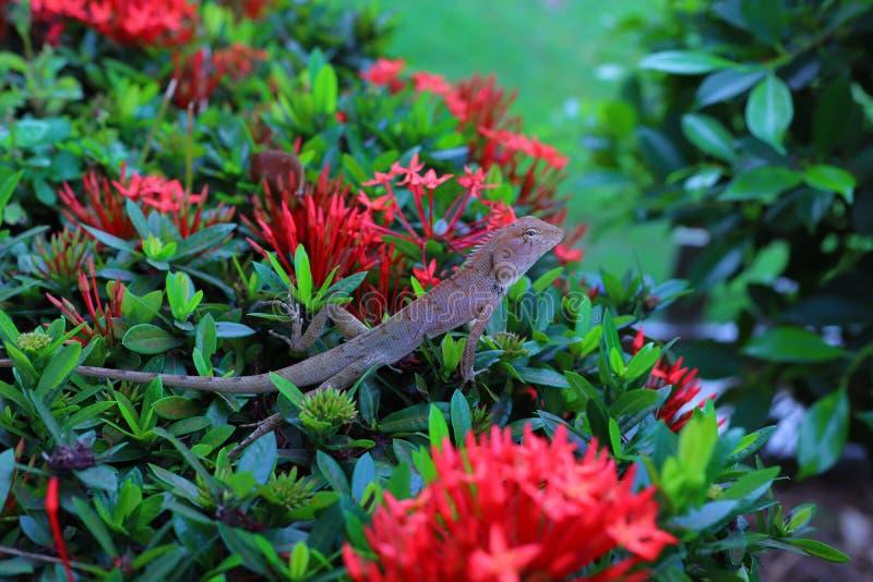 De hagedissen zijn reptielen die in het bos met rode bloemen Natuurlijke achtergrond zijn royalty-vrije stock foto