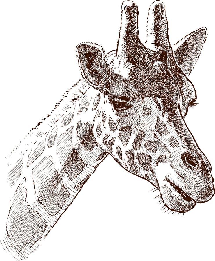 De hals aan het hoofd en dichter het zoemen royalty-vrije illustratie