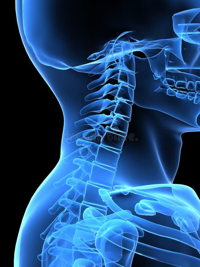 De halskant van de röntgenstraal stock illustratie